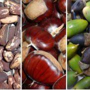 II Jornada d'arboricultura forestal: producció de fruits (castanyer, pi pinyer i alzina)