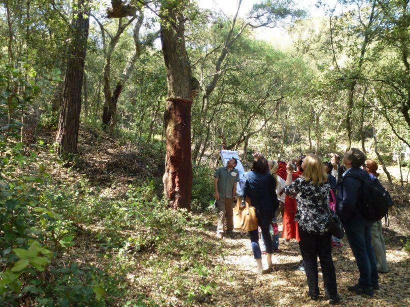 Jornades tècniques del Pla Anual de Transferència Tecnològica 2016 durant la II Setmana del bosc de Sant Celoni