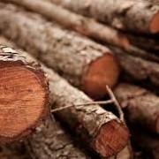 Preus dels productes forestals 2015