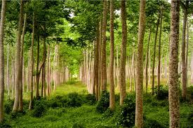 """Jornada tècnica """"Silvicultura propera a la Natura. Gestió, producció i economia"""""""