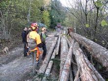 Cursos activitats auxiliars en aprofitaments forestals