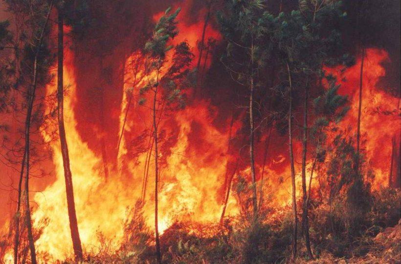 Criteris per a la millora de l'eficàcia de les mesures de prevenció d'incendis forestals