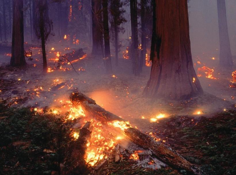El bosc mediterrani i el perill d'incendi forestal