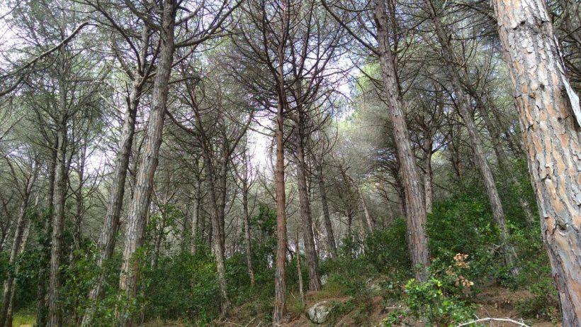 """III Setmana del Bosc. Passejada familiar """"Gestió forestal i conservació de l'astor, l'àguila marcenca i l'aligot vesper"""""""